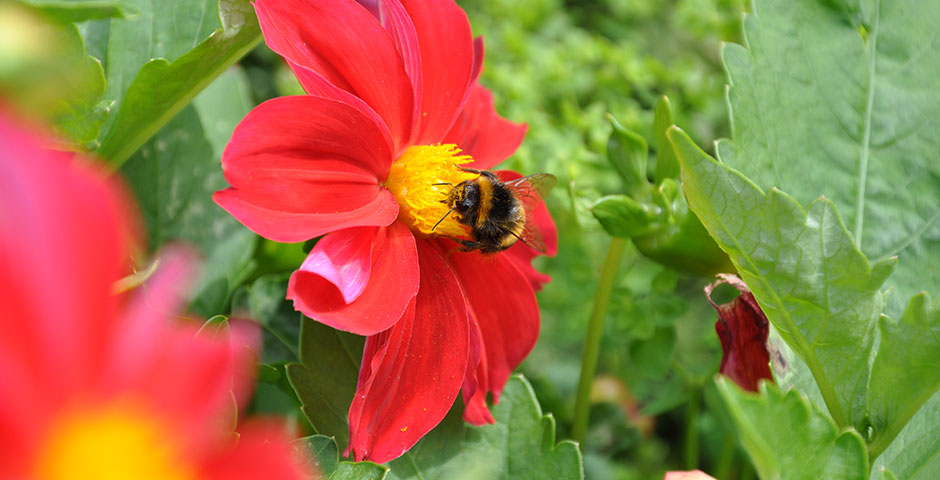 A haven for bees